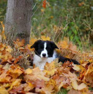 Riley und sein erster Herbst 2016