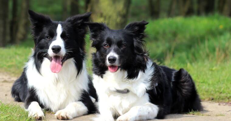 Besucht Riley und Kenzie auch auf Facebook